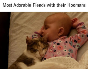 makes the Most adorable friends with their Hoomans
