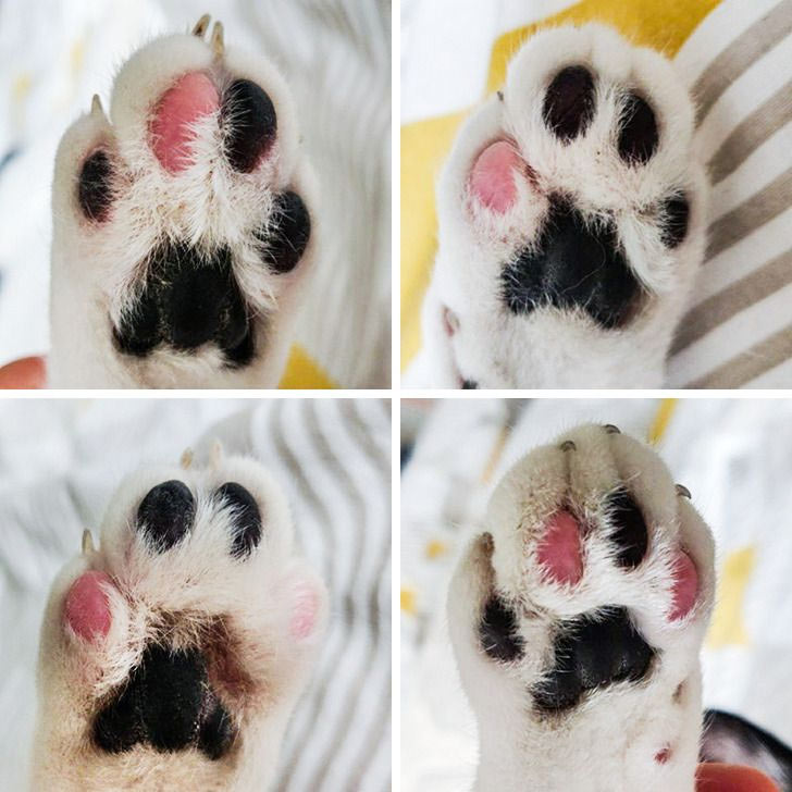 black and pink paws